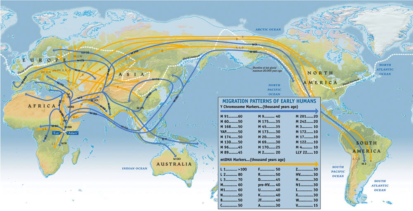 migration patterns of genetic lineages